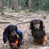 森林公園へ行ってきました♡の画像