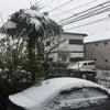 3月下旬の降雪は32年ぶり・・・乾燥よりありがたい・・・!!の画像