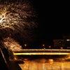 夜の温泉街は光の王国の画像