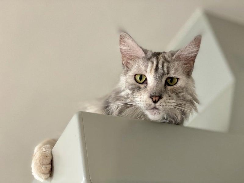 野良猫 台風