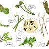 今日は山菜の日です。昔はよく山菜を採りに行ったので良く知っていたのですが、今は良く解らないの画像