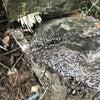 愛知県蒲郡市 シロアリの羽蟻のシーズンまで後1ヶ月です。の画像