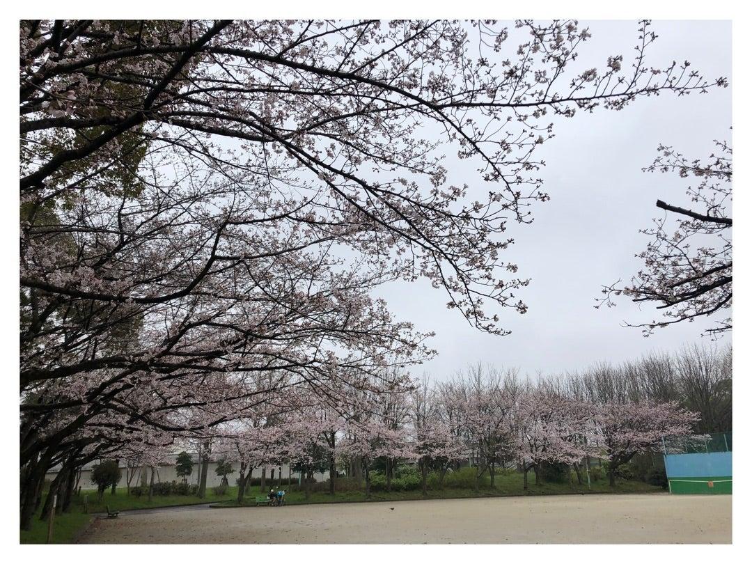 桜、咲いていましたよー!