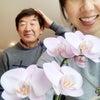 胡蝶蘭が綺麗に咲いてるの画像