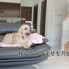 犬同士の殺し合い・・・無法地帯となった多頭崩壊の犬社会の中での画像
