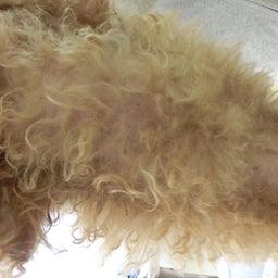 画像 犬の甲状腺低下症 の記事より 2つ目