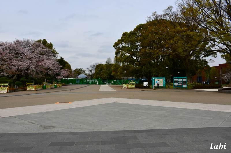 桜咲く上野の花見 自粛を要請 上野公園へ 其の3(3月30日)