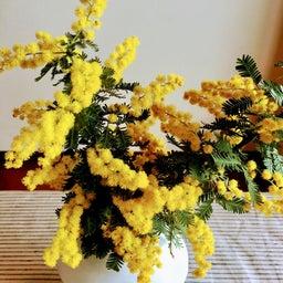 画像 春~ストロベリーロール の記事より 2つ目