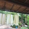 【活動再開します】草木染めラボ(フリークラス)の画像