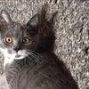 NMB48teamBIIの本郷柚巴です。猫コロナウィルスの数値が。の巻の画像