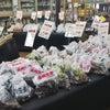 種芋、ショウガなどの販売が始まりましたの画像