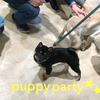パピーパーティーを開催しました!の画像