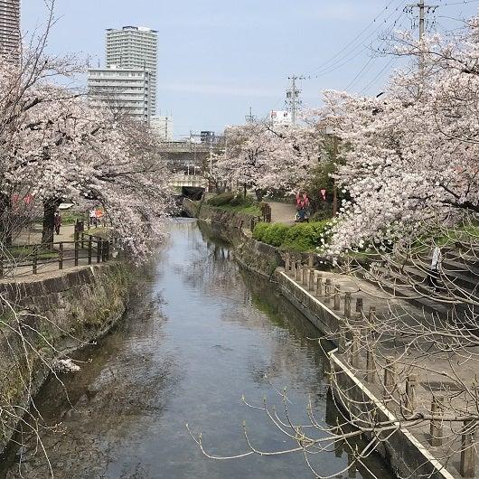 岐阜駅南の清水緑地公園の桜* | **ふらり**