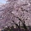 春はコロナなんかに負けるもんか!の画像