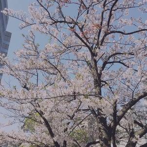 桜もち♪の画像