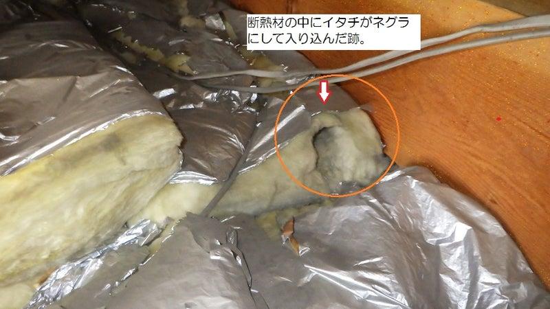 イタチが侵入した断熱材の形跡