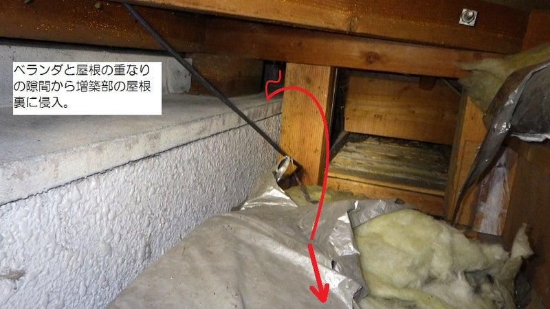 イタチの屋根裏への侵入経路