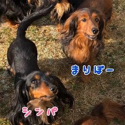 画像 優しい犬たち の記事より 5つ目
