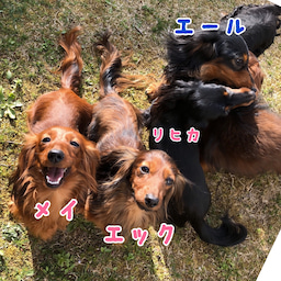 画像 優しい犬たち の記事より 3つ目