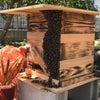 ニホンミツバチの分蜂を初捕獲!!その5(謎を残して最終回)の画像
