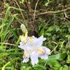 春の花を撮影してみましたの画像