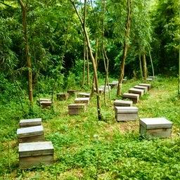 画像 Bio発酵エキスで育ったミツバチクリーム♡ の記事より 1つ目