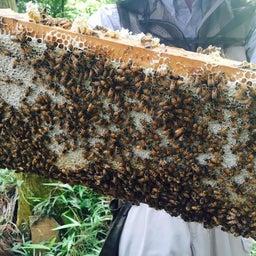 画像 Bio発酵エキスで育ったミツバチクリーム♡ の記事より 3つ目