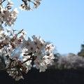 筆文字アートでみんな笑顔♡大阪/ 喜びと愛に満たされる『 えがおの筆 』書家 masami(雅書)~miyabi~