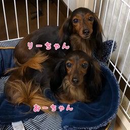 画像 リーちゃん&おーちゃん♡ の記事より 1つ目