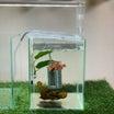 可愛い水中フィルター(﹡´◡`﹡ )