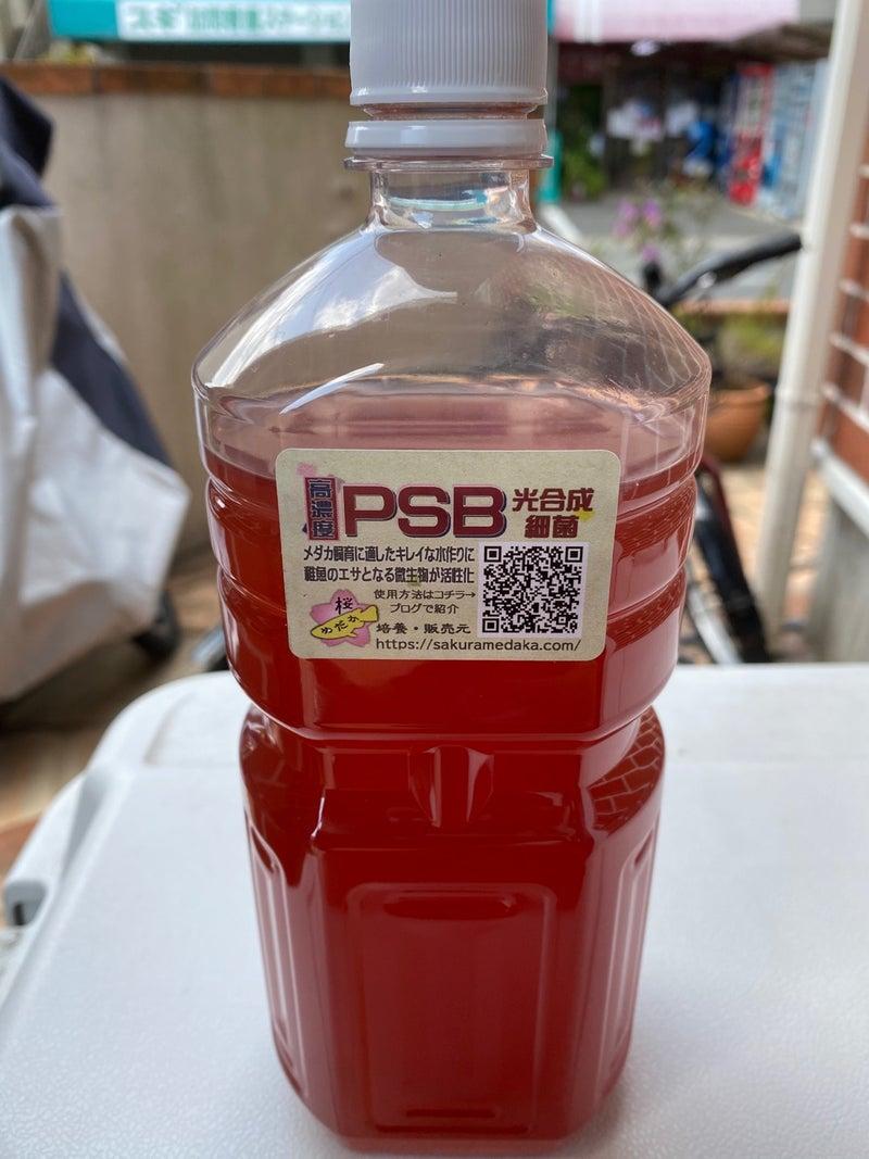 Psb メダカ PSBをペットボトルで培養したところまた緑色になったのでダメ元で使ってみました