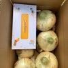 新玉ねぎ収穫の画像