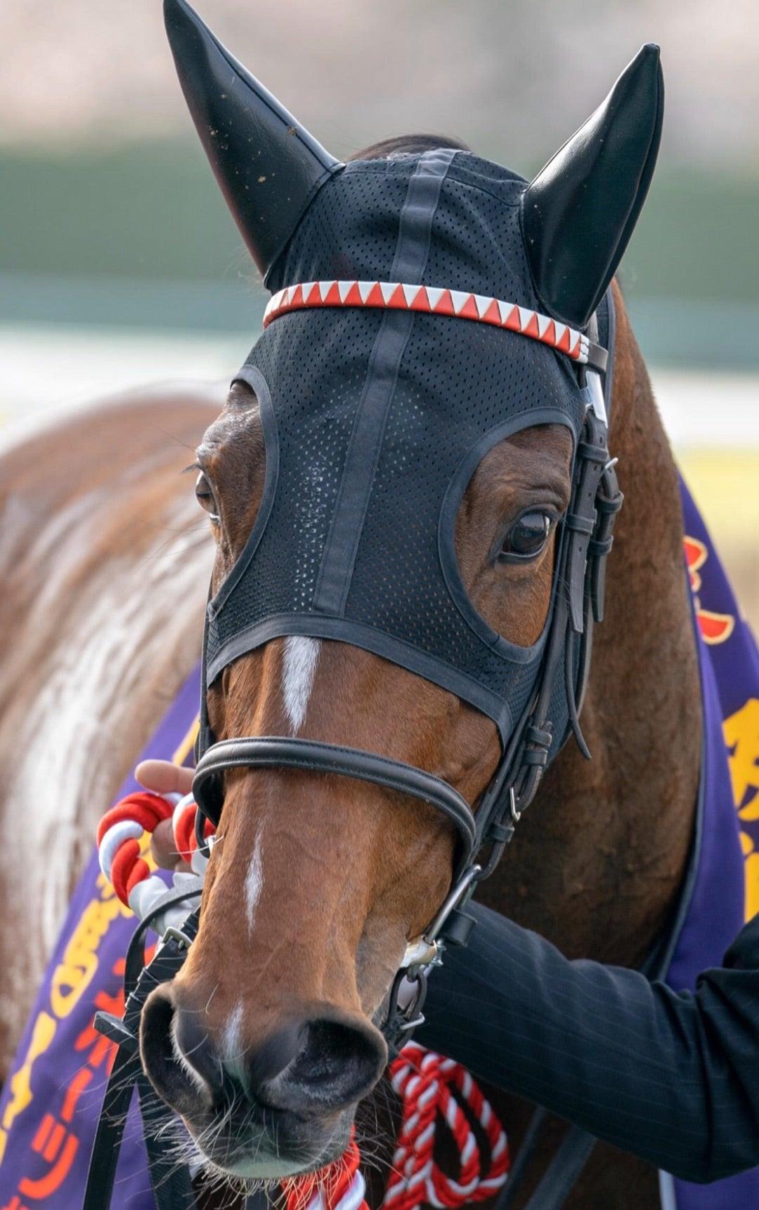 「とら♡」の楽しい競馬【阪神牝馬S  ニュージーランドT  予想】