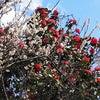 お花見ランの画像