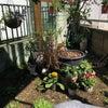 庭の模様替えとトトロ出現の画像