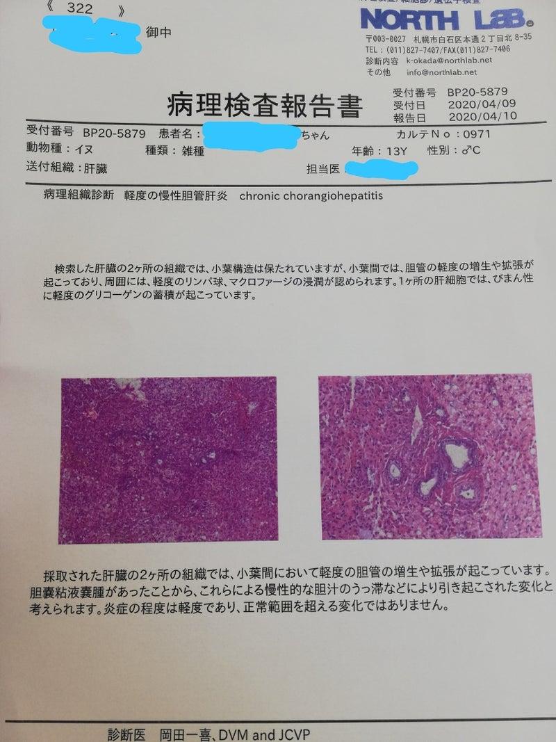 粘液 嚢腫 胆嚢