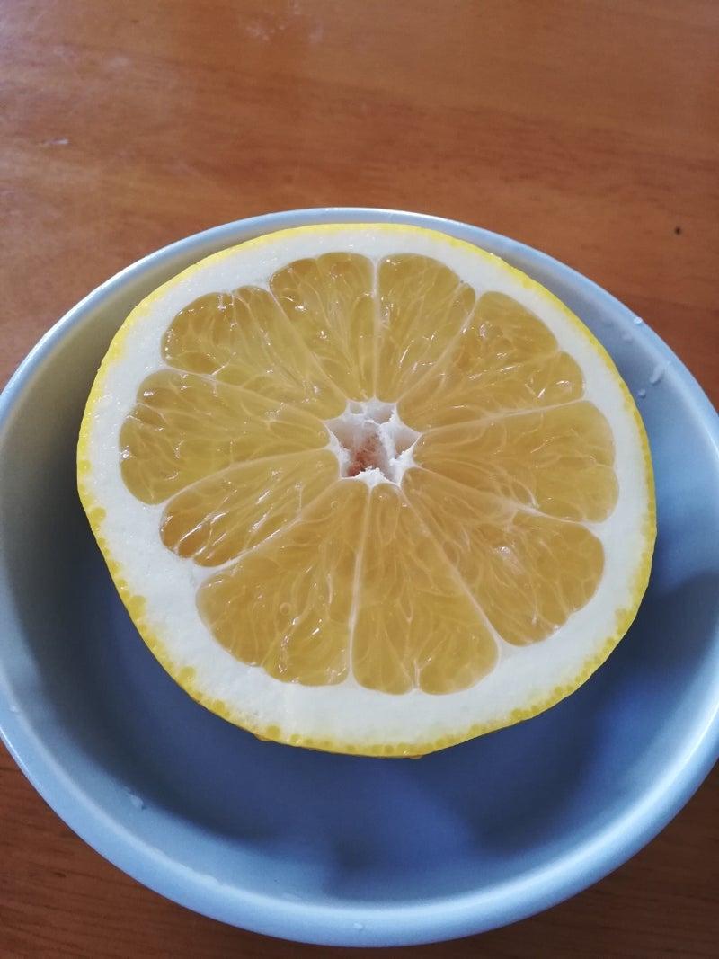 グレープフルーツ 降圧 剤