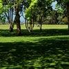 草地を取り合う「ニューヨーク市長」と「ニューヨーク州知事」!の画像