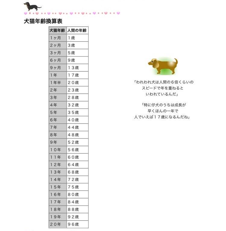 人間 歳 犬 13