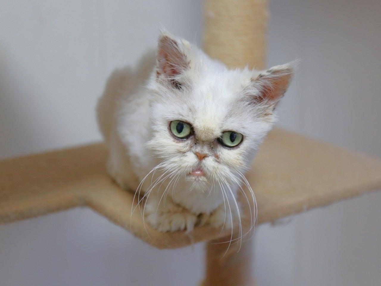 怪しい 猫 な か どうか も