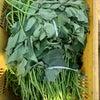 苗植え&アーリー販売中の画像