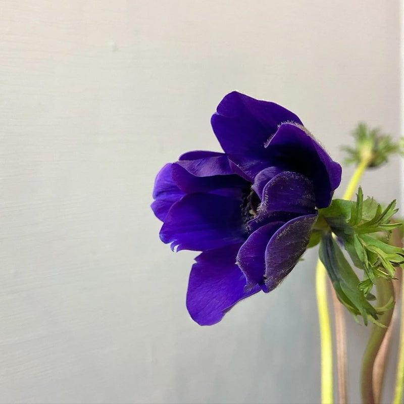 あつ 森 紫 アネモネ