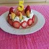 コニー5才の誕生日迎えました♬の画像