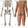 仙腸関節炎 おうち時間の増加で腰痛が急増中ですの画像