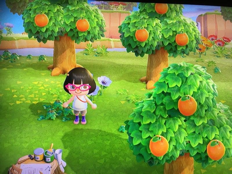 森 あつまれ フルーツ の どうぶつ