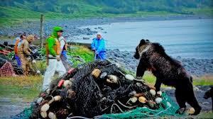 ヒグマ と 老 漁師