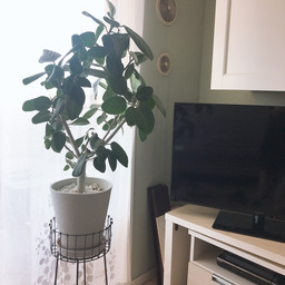 画像 【初心者向け】センス良く部屋にグリーン(植物)を飾るための3つのポイント の記事より 3つ目