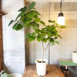 画像 【初心者向け】センス良く部屋にグリーン(植物)を飾るための3つのポイント の記事より 4つ目