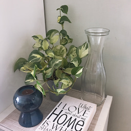 画像 【初心者向け】センス良く部屋にグリーン(植物)を飾るための3つのポイント の記事より 2つ目