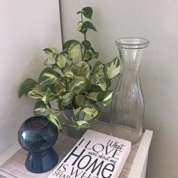 画像 【初心者向け】センス良く部屋にグリーン(植物)を飾るための3つのポイント の記事より 1つ目